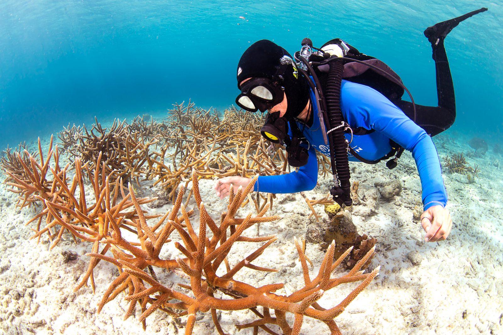 koraalherstelprogramma Harbour Village hotel