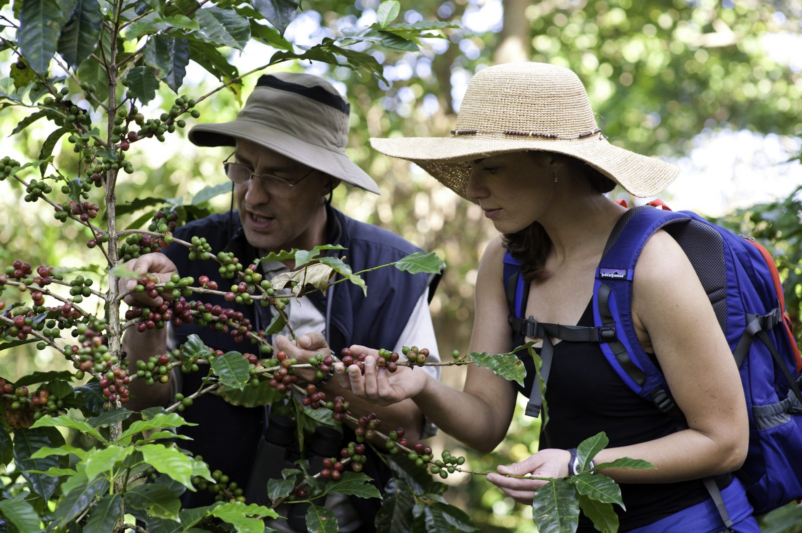 Guest picking coffee tour
